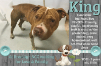 """Being Alone, Cats, and Children: King  Handsome  Sad-Faced Boy  IN NEED -Friendly  playful, dog friendly  (soft & social w/ the  greeter dog), crate  trained, very  housetrained, well  behaved when home  alone  At Brooklyn ACC wditing  for Love & Famil  31322-3 years  old, 53 lbs **** TO BE KILLED - 6/20/2018 ****  King's Intake Notes :) King had a loose body & a wagging tail. He was play bowing & pacing back & forth in the lobby. He sat still while I collared him, placed his face in my hands when I stuck them out in front of him & closed his eyes. He followed the transport driver on a leash & jumped into the van on his own.  KING'S FORMER OWNER'S FAVORITE THING ABOUT HIM WAS HOW HE ACTED LIKE A BABY. <3 That doesn't sound like the case of a hopeless dog that deserves to die. Sounds more like King may have been in a not-so-great home situation when he actually deserves just the opposite. Like children, dogs thrive in a positive, loving and nurturing environment. King is a handsome 3 year old pibble who lived with his family his entire life and was recently dumped at the shelter when he """"became afraid of the children"""" in his old home. Kings owner states that he was initially very affectionate and gentle with children up until 3 months ago when she left him with one of her friends who left him locked in a cage. King used to get poked and hit by the small children at that home while he was in this cage. Poor guy. He was almost relieved to get to the shelter and meet some new friends who doted on him and gave him some positive attention instead of poking him and hitting him in his face. Lets share King to the moon and back because he's going to need all the attention and shares he can get with just an intake pic. King deserves a chance in a home where he'll be safe and loved.  KING@BROOKLYN ACC Hello, my name is King My animal id is #31322 I am a male brown brindle dog at the  Brooklyn Animal Care Center The shelter thinks I am about 3 years old, 53 lbs Came into shelte"""