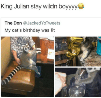 Cats Birthday