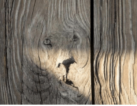 Faces-In-Things, King, and Fence: King of the jungle on the backyard fence https://t.co/9P6TQhJo3m