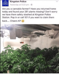 Police, Pop, and Home: Kingston Police  Yesterday at 5:23 pm e  Are you a cannabis farmer? Have you returned home  today and found your 281 plants missing? Don't worry  we have them safely stashed at Kingston Police  Station. Pop in or call 101 if you want to claim them  back.... Cheers KP