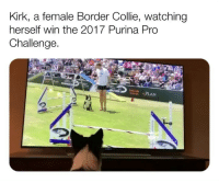 "America, Be Like, and Bless Up: Kirk, a female Border Collie, watching  herself win the 2017 Purina Pro  Challenge.  DOG  PLAN  p3 Ain't I been told y'all?! BYOBC. No, not bring your own bottle - bring ya own is bottle is cancelled stop drinking so damn much and enjoy the Thai food without the liquor cot dammit that curry is delicious on its own without the merlot but lemme not start, that's for another day lmao. BYOBC mean Be Ya Own Biggest Cheerleader. U feel me? Always. Celebrate ya own success. Motivate YOURSELF. Ultimately among friends but even among family u gon have people cheering for you buuuuuuut NOT really cheering for u 😂. This ain't bc they evil! They might be - like some of them - but mainly they probably just a lil tight that they ain't having success like u. U feel me? That's why u gotta watch out sometimes about bragging about ya accomplishments all on Facebook and LinkedIn like ""truly humbled to humbly be awarded the 40 Under 40 in My [Extremely Specific Field of Work] in [Oddly Specific Geographic Region]"". U really humble bc u seem hella braggadocious right now no shots lol. Just keep some of that inside and be thankful to God and celebrate with yourself not bc u the sh!t but because u know that out of all the people that God could have rewarded for they hard work he chose you. ""But smash I work 10x harder than all my friends, I deserve my success!"" No. U deserve nothing. It's Filipino workmen in Dubai right now building buildings in 120 degree heat to make a lil scratch to send home. THEY work harder than u. It's just that u was born in America and they was born in the Philippines u get me! That's why every time I pull an all nighter for work on a transaction, I remember that but for the Grace of God, I could be in Dubai on the 98th floor of a building working myself to death. May God always make us thankful and may he reward our hard work. Be ya own cheerleader beloveds! Bless up ❤️"