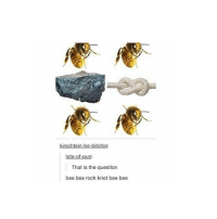 kirschtein-be-bitchin:  lots-of-pun:  That is the question  bee bee rock knot bee bee I thought wasp wasp rock loop wasp wasp