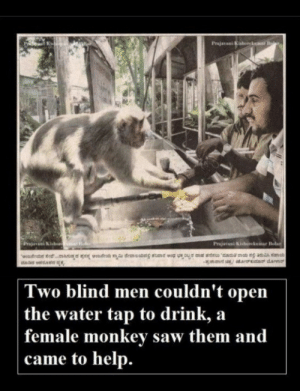 Saw, Help, and Water: Kis  Two blind men couldn't open  the water tap to drink, a  female monkev saw them and  came to help.