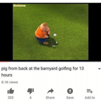 back at the barnyard: KissCartoon  pig from back at the barnyard golfing for 10  hours  8.1K views  4  Share  Save  Add to