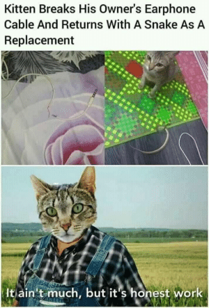 That's so sweet.Hes trying his best. via /r/memes https://ift.tt/2M8XnLt: Kitten Breaks His Owner's Earphone  Cable And Returns With A Snake As A  Replacement  It ain't much, but it's honest work That's so sweet.Hes trying his best. via /r/memes https://ift.tt/2M8XnLt