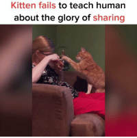 Memes, 🤖, and Sun: Kitten fails to teach human  about the glory of sharing :) Sun Gazing