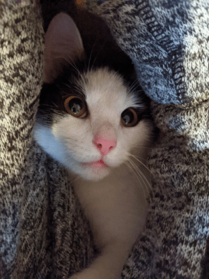 Kitten resting under my arm. Probably the best picture I have ever taken.: Kitten resting under my arm. Probably the best picture I have ever taken.