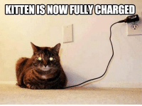 kitten: KITTEN S NOW FULLY CHARGED