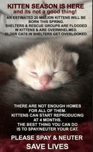 Cats, Memes, and Best: KITTEN SEASON IS HERE  and its not a good thing!  AN ESTIMATED 20 MILLION KITTENS WILL BE  BORN THIS SPRING  SHELTERS&RESCUE GROUPS ARE FLOODED  W KITTENS&ARE OVERWHELMED  OLDER CATS IN SHELTERS GET OVERLOOKED.  THERE ARE NOT ENOUGH HOMES  FOR ALL OF THEM.  KITTENS CAN START REPRODUCING  AT 4 MONTHS.  THE BEST THING YOU CAN DO  IS TO SPAYINEUTER YOUR CAT.  PLEASE SPAY & NEUTER  SAVE LIVES Please spay and neuter your cats!! If you cannot afford it and you live in Lapeer County, please reach out to us!  LapeersAdoptables@yahoo.com