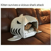 Memes, Shark, and Sharks: Kitten survives a vicious shark attack Awwwwwww look at him