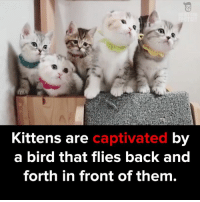 Memes, Birds, and 🤖: Kittens are  captivated  by  a bird that flies back and  forth in front of them. Curious little ones! via - JukinMedia