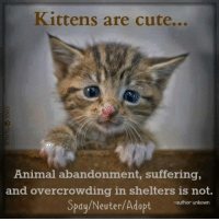 Kittys Purrsuit of Happiness =^..^= So many kitties, not enough homes :(: Kittens are cute...  Animal abandonment, suffering,  and overcrowding in shelters is not.  Spay/Neuter/Adopt  -author unkown Kittys Purrsuit of Happiness =^..^= So many kitties, not enough homes :(