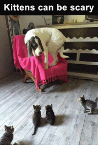 The feud continues: Kittens can be scary The feud continues