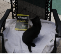 Book, Kittens, and Water: Kittens  FOR  DUMMIES  A Reference for the Rest of Us I am getting a refund on this book, no matter how much he reads it, he still derps out and puts his nose in the water bowl...