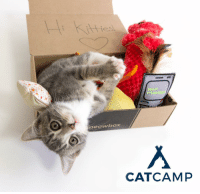 Kitties, Memes, and 🤖: kitti  ini  HELLO?  IT'S MEOWS  neow box  CATCAM P Calling all kitty enthusiasts😻! meowbox will be at @catcampNYC, the city's first feline focused conference and adoption extravaganza: on THIS weekend at the Metropolitan Pavilion on March 11th and 12th🗽! Make sure you come by to say hi, check out our goodies🐾 and enter our raffle🎁!! Oh, did we mention we are giving away FREE toys?! See ya there😸👋🏽! catcampnyc themeowlife