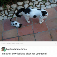Cats, Cute, and Love: kittiezandtittiez.tumblr.com  bigdumbcutefaces  a mother cow looking after her young calf I love cats they're so cute @idiosyncrat