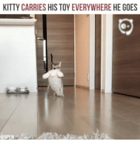 Cat, Kitty, and Toy: KITTY CARRIES HIS TOY EVERYWHERE HE GOES A cat and his toy