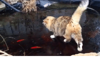 Kitty cat and fishy-fishy. So cute!!! <3 :-): Kitty cat and fishy-fishy. So cute!!! <3 :-)