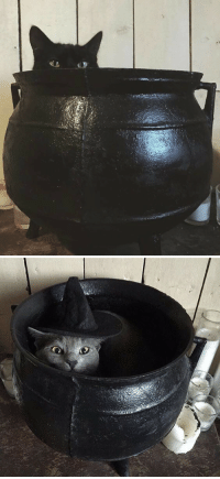 kitty: cauldron kitties !: kitty: cauldron kitties !