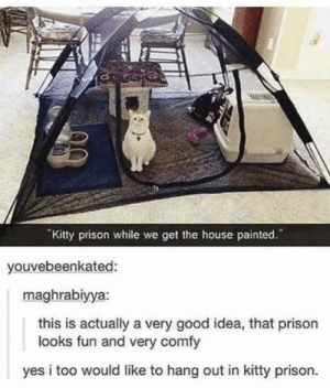 "Prison, Good, and House: ""Kitty prison while we get the house painted.""  youvebeenkated:  maghrabiyya:  this is actually a very good idea, that prison  looks fun and very comfy  yes i too would like to hang out in kitty prison. I want to be in that kitty prison"