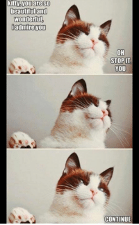 Grumpy Cat, Human, and Humanism: kitty you are SO  beautiful and  Wonderful  i admire you  OH  STOP IT  YOU  CONTINUE Please human....