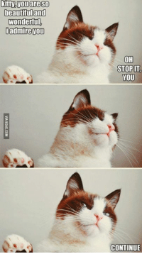 Dank, 🤖, and Oh Stop It You: kitty,you are So  beautiful and  wonderful  i admire you  OH  STOP IT  YOU  CONTINUE Cats in a nutshell. http://9gag.com/gag/aVOK84d?ref=fbp
