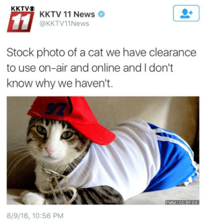 News, Cat, and Air: KKTV 11 News  @KKTV11News  Stock photo of a cat we have clearance  to use on-air and online and I don't  know why we haven't.  Petful / CC BY 2.0  8/9/16, 10:56 PM