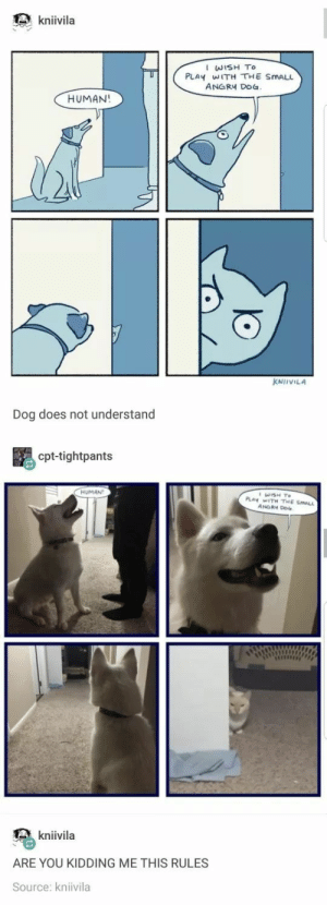 Tumblr, Angry, and Wholesome: kniivila  I WISH To  PLAY WITH THE SMALL  ANGRY DO  HUMAN!  KNİIVILA  Dog does not understand  cpt-tightpants  HUMAN  kniivila  ARE YOU KIDDING ME THIS RULES  Source: kniivila Wholesome tumblr