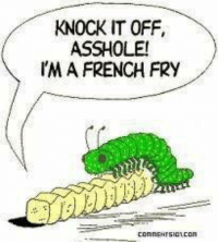 KNOCK IT OFF,  ASSHOLE!  I'M A FRENCH FRY  connENrsion CO Lol - Kittykat