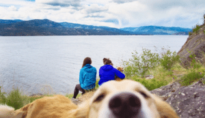 Target, Tumblr, and Blog: knot-ur-babe:  rrachelinthewildd:  We tried to get a nice scenic shot but she does what she wants.   This is the most scenic thing I've ever seen