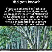 All the feels. 💌🌲 trees mothernature loveletters ➡️📓 Buy our book on Amazon: [LINK IN BIO]: know?  did you know?  Trees can get email in Australia.  In 2013, trees were assigned email  addresses by the city of Melbourne  so its citizens could report potential  problems, but people ended up  writing thousands of love letters  to their favorite trees instead.  PHOTO: BBC. COM  DIDYOUKNOWBLOG.COM All the feels. 💌🌲 trees mothernature loveletters ➡️📓 Buy our book on Amazon: [LINK IN BIO]