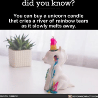 Where do I sign? 🌈 unicorn rainbow amazing candle present ➡📱Download our free App: [LINK IN BIO]: know?  did you know?  You can buy a unicorn candle  that cries a river of rainbow tears  as it slowly melts away.  DIDYOUKNOWFACTs.coM  PHOTO: FIREBOX Where do I sign? 🌈 unicorn rainbow amazing candle present ➡📱Download our free App: [LINK IN BIO]