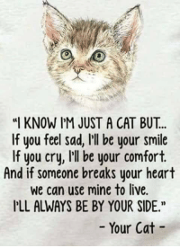 cat: KNOW I'M JUST A CAT BUT..  If you feel sad, Ill be your smile  If you cry, I'Il be your comfort.  And if someone breaks your heart  we can use mine to live.  PLL ALWAYS BE BY YOUR SIDE  Your Cat