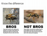 Alive, Ass, and Dicks: Know the difference  BROS  NOT BROS  They just want to see what you're  playing. You better thank them for  giving your dumb ass honey and  keeping the flowers alive and shit.  These dicks wear the bee uniform just to  troll wildlife and YOU. Do not be fooled,  these guys exist only to fuck you up and  don't care what you're playing. 😂😂😂😂