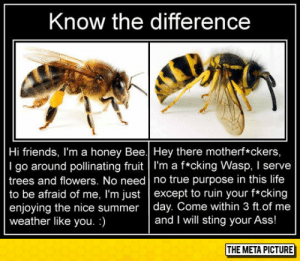 laughoutloud-club:  For Those Who Can't Tell The Difference: Know the difference  Hi friends, I'm a honey Bee.| Hey there motherf*ckers,  I go around pollinating fruit l'm a f*cking Wasp, I serve  trees and flowers. No need no true purpose in this life  to be afraid of me, I'm just except to ruin your f*cking  enjoying the nice summer day. Come within 3 ft.of me  weather like you.)  and I will sting your Ass!  THE META PICTURE laughoutloud-club:  For Those Who Can't Tell The Difference