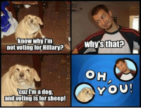 Voting Meme: Know Why  not voting for Hillary?  CUT I'm a dog.  and voting is for Sheep!  whys that  A YOU!