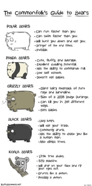 Know your bears!!!: Know your bears!!!