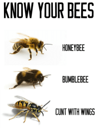"""<p><a href=""""http://ragecomicsbase.com/post/160219989117/know-your-bees"""" class=""""tumblr_blog"""">rage-comics-base</a>:</p>  <blockquote><p>Know Your Bees</p></blockquote>: KNOW YOUR BEES  HONEYBEE  BUMBLEBEE  CUNT WITH WINGS <p><a href=""""http://ragecomicsbase.com/post/160219989117/know-your-bees"""" class=""""tumblr_blog"""">rage-comics-base</a>:</p>  <blockquote><p>Know Your Bees</p></blockquote>"""