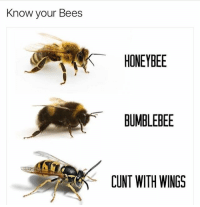 And that concludes your wildlife lesson for today 🙂🐝 (@_theblessedone ): Know your Bees  HONEYBEE  BUMBLEBEE  CUNT WITH WINGS And that concludes your wildlife lesson for today 🙂🐝 (@_theblessedone )
