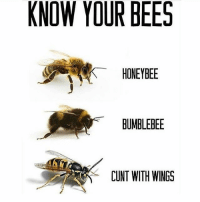 KNOW YOUR BEES  HONEYBEE  BUMBLEBEE  CUNT WITH WINGS Educate yourselves • • • • meme cringe vegan lol funny memes dank memesdaily trayvonvert meem dankmemes edgy edgymemes like4like tagsforlikes triggeredmemes followforfollow ayy aye ayylmao ayelmao lmao filthyfrank hehexd xd hehe injectedmemes injectedmeme furry