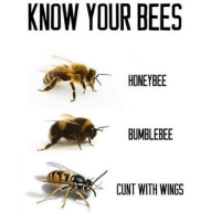 Follow @whitepeoplehumor for more 😂😂😂: KNOW YOUR BEES  HONEYBEE  BUMBLEBEE  CUNT WITH WINGS Follow @whitepeoplehumor for more 😂😂😂