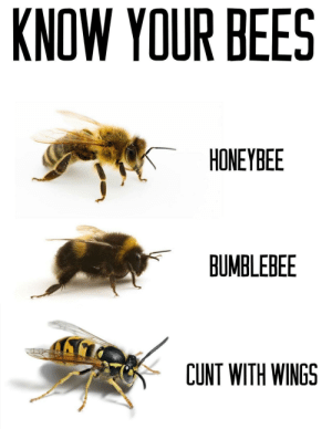 Know your bees people!: KNOW YOUR BEES  HONEYBEE  BUMBLEBEE  CUNT WITH WINGS Know your bees people!