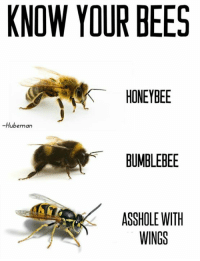 it's that time of season again...: KNOW YOUR BEES  HONEYBEE  Hub  BUMBLEBEE  ASSHOLE WITH  WINGS it's that time of season again...