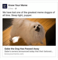 NOOOOOOOOO • IT'S A CRUEL, CRUEL, WORLD. • {TAGS:} dankmemes memes dank ayylmao kek mlg edgy pepe filthyfrank nochill johncena depressed weaboo cringe papafranku lmfao theevilwithin youtube killme atheist: Know Your Meme  Know  Meme  We have lost one of the greatest meme doggos of  all time. Sleep tight, pupper.  Gabe the Dog Has Passed Away  Gabe's owners announced today that their beloved...  knowyourmeme.com NOOOOOOOOO • IT'S A CRUEL, CRUEL, WORLD. • {TAGS:} dankmemes memes dank ayylmao kek mlg edgy pepe filthyfrank nochill johncena depressed weaboo cringe papafranku lmfao theevilwithin youtube killme atheist
