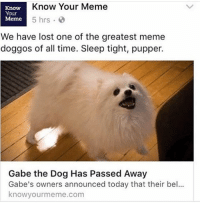 NOOOOOOOO😭😭😭: Know Your Meme  Know  Your  5 hrs  Meme  We have lost one of the greatest meme  doggos of all time. Sleep tight, pupper.  Gabe the Dog Has Passed Away  Gabe's owners announced today that their bel...  knowyourmeme.com NOOOOOOOO😭😭😭