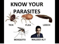 Know Your: KNOW YOUR  PARASITES  LEECH  FLEA  TICK  WALEED ALY  MOSQUITO