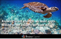 Memes, Turtle, and 🤖: Knowingisnot enoodEwe must apply.  illing s not enough we ust do  ohann  Wolfgang von Goethe  Brainy  Quote Knowing is not enough; we must apply. Willing is not enough; we must do. - Johann Wolfgang von Goethe https://www.brainyquote.com/quotes/quotes/j/johannwolf161315.html #brainyquote #QOTD #turtle #knowledge