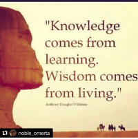 """Repost @noble_omerta with @repostapp ・・・ 👁👌: """"Knowledge  comes from  learning  Wisdom comes  from living  Anthoay Dougla. Willian:  noble omerta Repost @noble_omerta with @repostapp ・・・ 👁👌"""