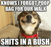 I was so relieved (as was he, I guess): KNOWS I FORGOT POOP  BAG FOR OUR WALK  SHITS IN A BUSH I was so relieved (as was he, I guess)