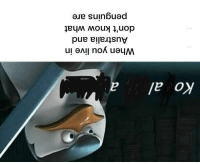 Meme, Memes, and Reddit: Ko al  When you live in  Australia and  don't know what  penguins are memecage:  A Kowalski meme for my Australian buddies.